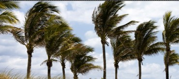 WIND MACHINE RENTALS